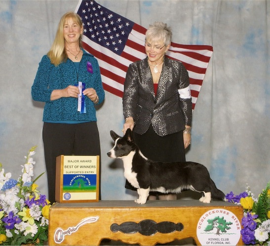 Cardigan Welsh Corgi image: Ch Telltail Show N Tail Midnight Confession
